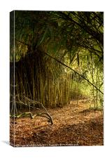 Sunlight through bamboo, Canvas Print