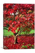 Red Autumn tree, Canvas Print