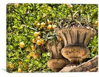 Sicillian Lemons, Canvas Print