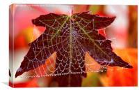 Square web, Canvas Print