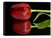 Tulip Reflected, Canvas Print
