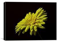 Fake Flower, Canvas Print