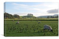 Sheep Grazing in Yorkshire