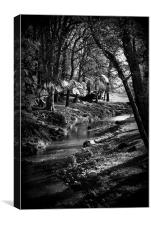 Stream running through trees in Yorkshire