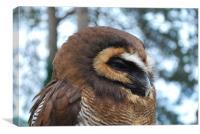 Sleepy Wood Owl