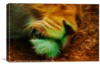 Sleeping Male Lion 2, Canvas Print