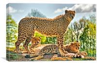 Three Cheetahs, Canvas Print