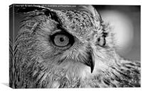 Bengal Owl black and White, Canvas Print