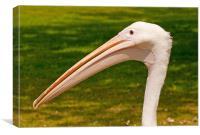 Pelicans Head, Canvas Print