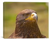 Golden Eagle, Canvas Print