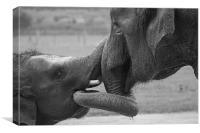 Elephants Bonding, Canvas Print