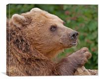 Brown Bear, Canvas Print
