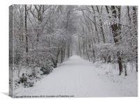Winters Trail, Canvas Print