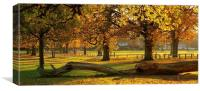 Prospect Park Autumn colours, Canvas Print