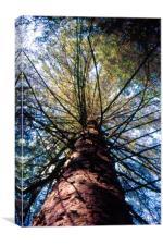 tree climb, Canvas Print