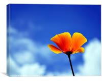 Poppy California Dreaming, Canvas Print