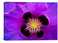 Poppy in Lilac, Canvas Print