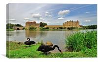 Black Swans at Leeds Castle, Canvas Print
