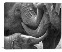 Elephants Tender Touch, Canvas Print