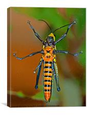 Insect Landing, Canvas Print
