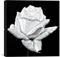 Single White Rose, Canvas Print