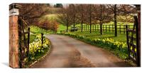 Daffodil Walk, Canvas Print