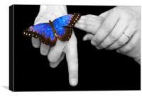 Butterfly Landing, Canvas Print
