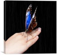 The Resting Butterfly, Canvas Print