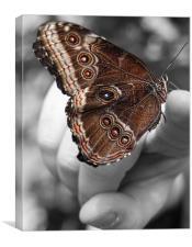 Butterfly Beauty, Canvas Print