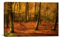 Autumn Woods colour, Canvas Print