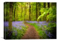 Bluebells path, Canvas Print
