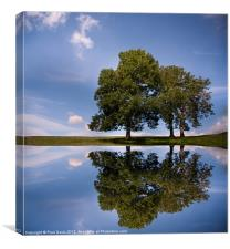 Three trees, Canvas Print