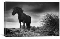 Equus, Canvas Print