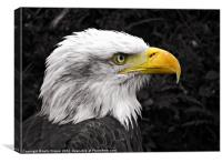 Liberty The Eagle, Canvas Print