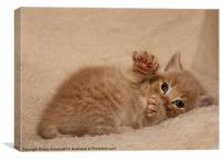 Playful Kitten, Canvas Print