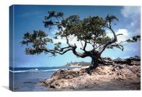 The Famous Tree at Treasure Beach
