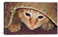 Kitten Hiding, Canvas Print