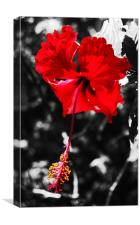 Grand Hibiscus, Canvas Print