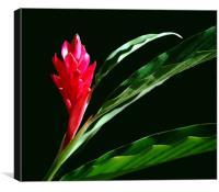 Sillouhetted Ginger Flower, Canvas Print