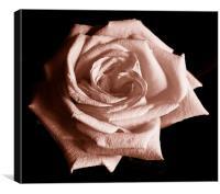 Tritone Rose, Canvas Print