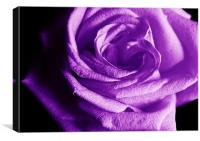The Purple Rose of Love