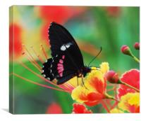 Butterfly in Costa Rica, Canvas Print