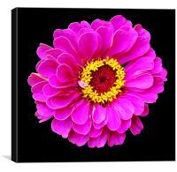 Beautiful Purplish Flower Close Up, Canvas Print