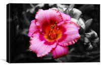 Grand Lily, Canvas Print