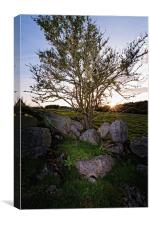 Leylodge tree, Canvas Print