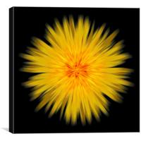 sunburst, Canvas Print