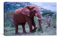 Red Elephant, Canvas Print