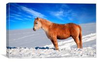 Ginger in Winter, Canvas Print