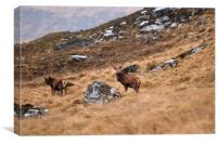 Stags on the hillside, Canvas Print
