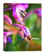 Lone Wasp, Canvas Print